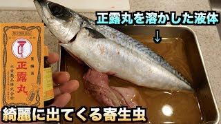 【実験】正露丸の液体に魚を浸けたら寄生虫が飛び出してきた!!