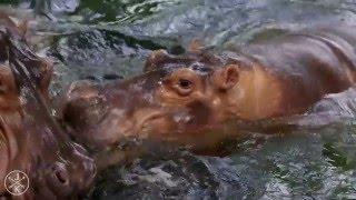 Красивое видео  Природа от которой захватывает дух