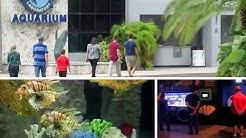 Mote Marine Laboratory - Review - Sarasota, FL