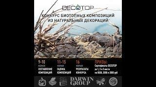 Оцениваем работы Decotop - Конкурс биотопных композиций из натуральных декораций.