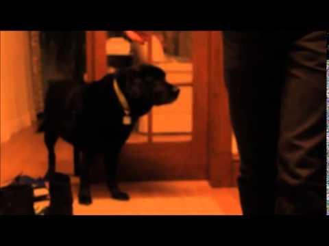 Lonely Dog Short Film