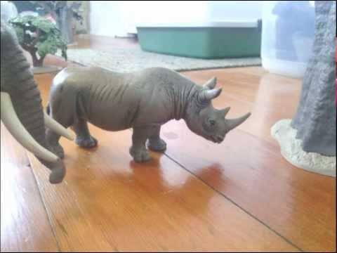 Animal Adventures' Studios Presents - Animal Face-Off: Elephant vs Rhino