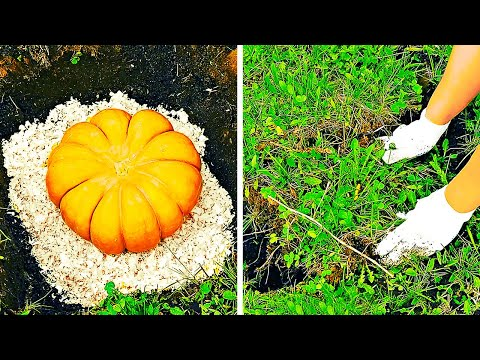 23 SIMPLE FOOD HACKS || HOW TO SAVE SPOILED FOOD
