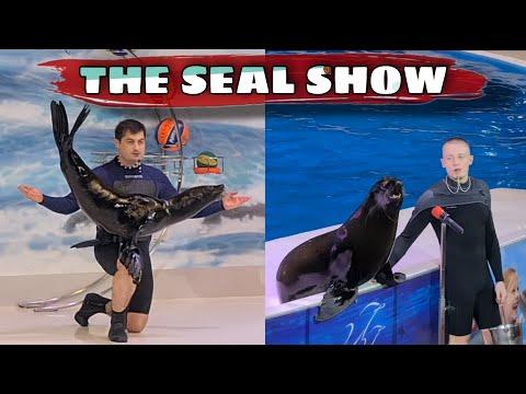 THE SEAL SHOW | DUBAI DOLPHINARIUM | I AM PREENZ