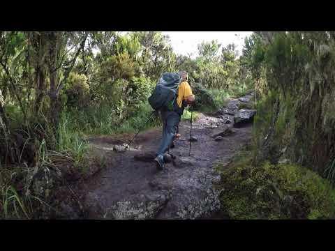 Kilimanjaro, Day2 Machame Route