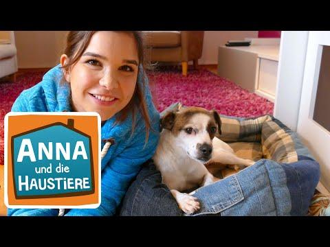 Willkommen Zu Hause Streuner Information Fur Kinder Anna Und Die Haustiere Spezial Youtube