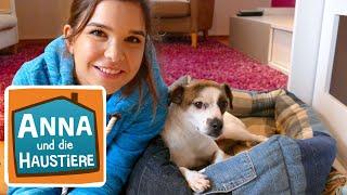 Willkommen zu Hause Streuner! | Information für Kinder| Anna und die Haustiere | Spezial