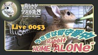 【 Live! 】ウサギは留守番中 0053 2019年3月15日 thumbnail