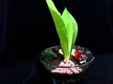 Lily4plants نبتة من تصميم