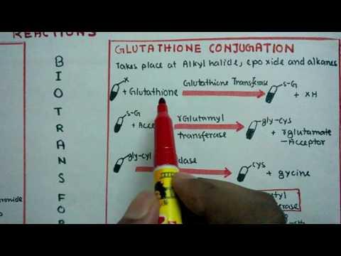 Phase 2 Biotransformation reaction