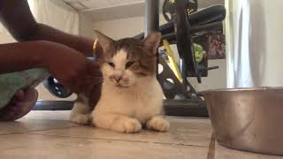 ASMR Kitty Therapy