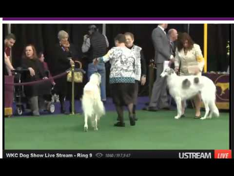 2016 westminster borzoi judging
