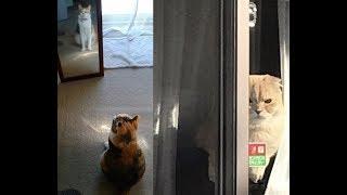 お留守番を任された猫&犬ちゃんの反応がじわじわ面白いw~The reaction...