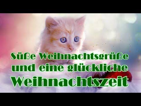 Süße Weihnachtsgrüße.Weihnachtsgrüße Süße Weihnachtsgrüße Mit Katzen Youtube