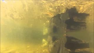 Cubandino cola de craft (Craftandino) estilo  trad. nadando