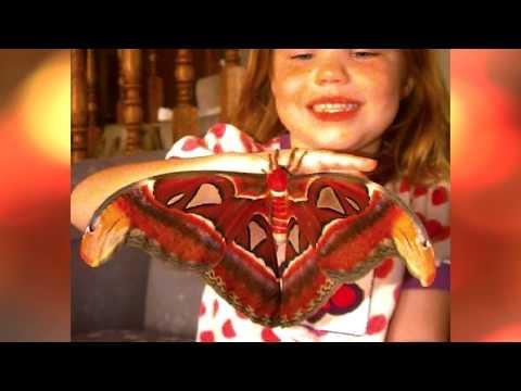 TOP 10 Cei mai mari gandaci gasiti vreodata | insecte
