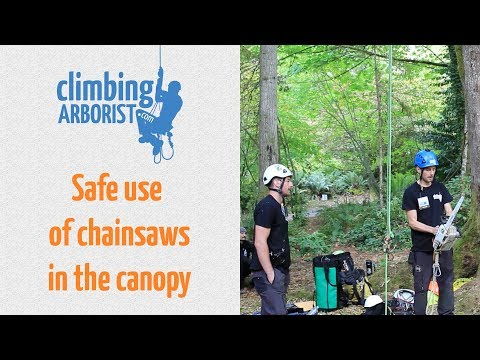 Safe use of chainsaws in the canopy