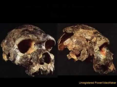 Evidence for Evolution - Hominid Fossils Pt.1