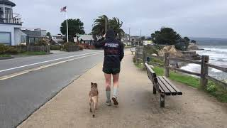 Australian Cattle Dog, Auburn | Dog Training in Monterey, CA
