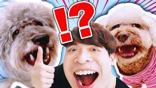 🐶為愛犬準備3個「不得了的東西」?😆MUFFIN和BROWNIE開心到傻了!(中字)