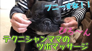 フレブル子犬タプさん生後1歳と39日目♪ 最近、ママさんは暇つぶしに買っ...