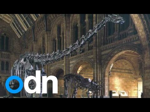 Museum's star 'Dippy' the dinosaur to retire, making way for blue whale