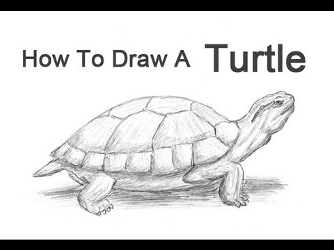 How to draw a turtle red eared slider youtube