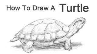 How to Draw a Turtle (Red-Eared Slider)