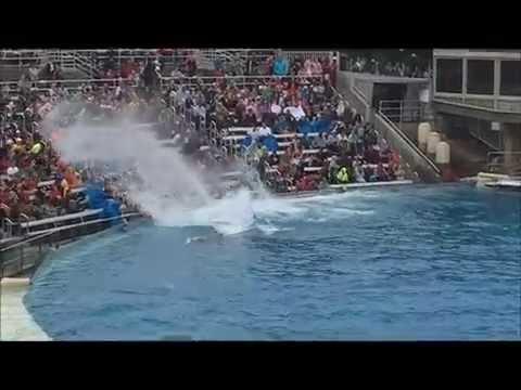 SeaWorld Suspende Crianza de Orcas