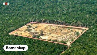 Hoe de Amazone elke 15 seconden een voetbalveld verliest