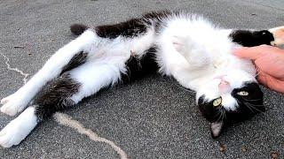 公園で寝ていた野良猫、近づくと寝転んだまま背伸びしてカワイイ