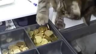 кот вор