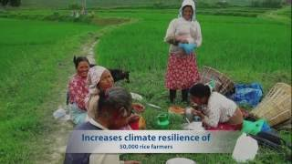 Reducing methane emissions from rice farming