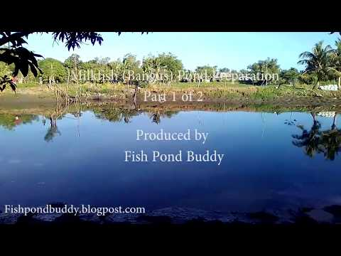 Milkfish (Bangus) Pond Preparation - Part 1 Of 2