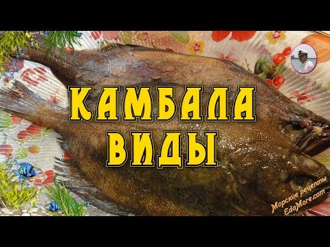 Рыба камбала: фото, видео, ловля камбалы, рецепты