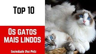 As 10 raças de gatos mais lindos mundo - Sociedade Dos Pets