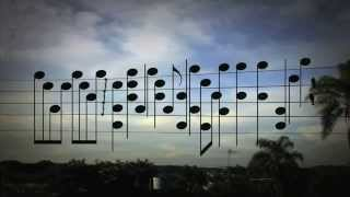 Amazing Music by the Birds on a Wire