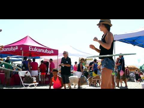 Surf Dog Surf-A-Thon | Helen Woodward Animal Center | Del Mar Dog Beach | Carmel Valley San Diego