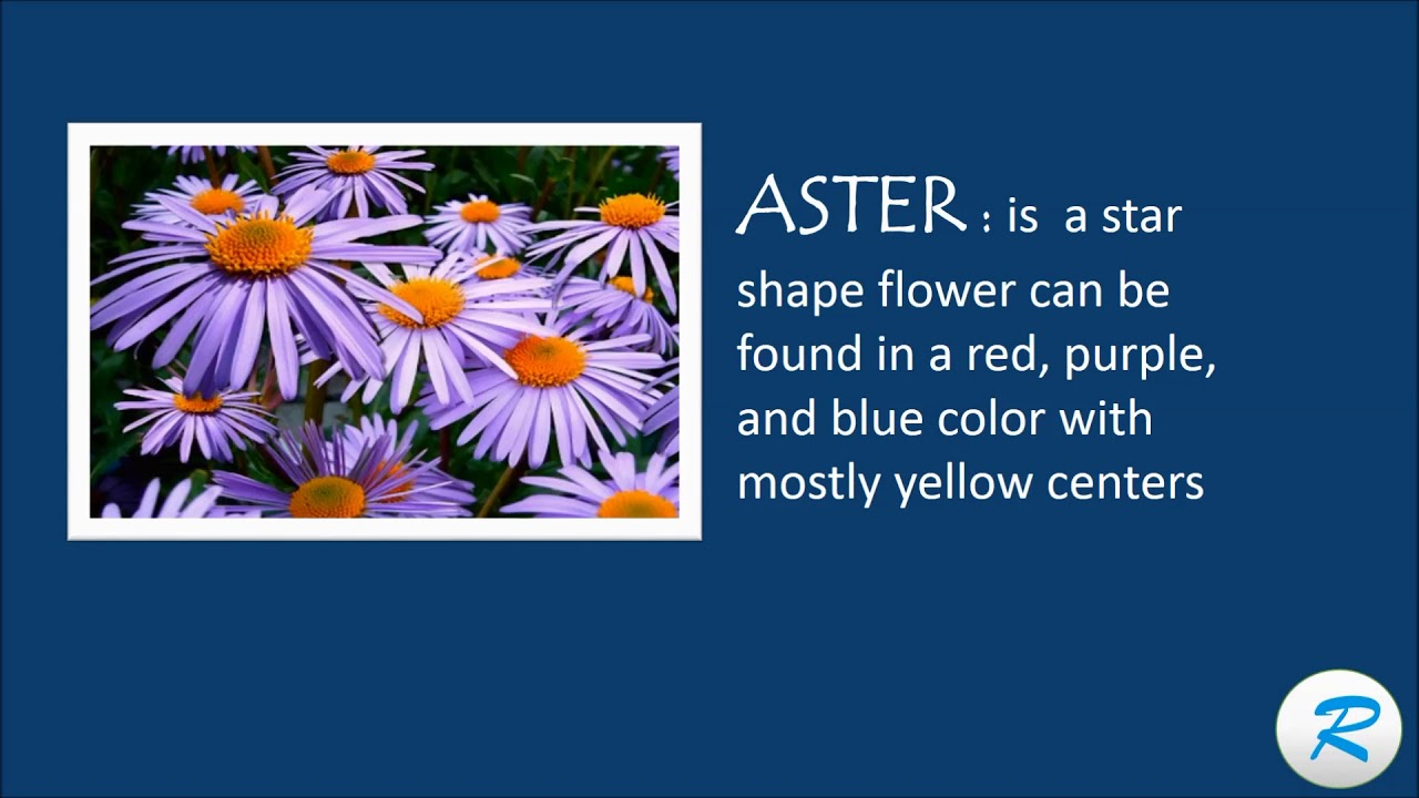 How to pronounce aster aster pronunciation aster flower meaning how to pronounce aster aster pronunciation aster flower meaning izmirmasajfo