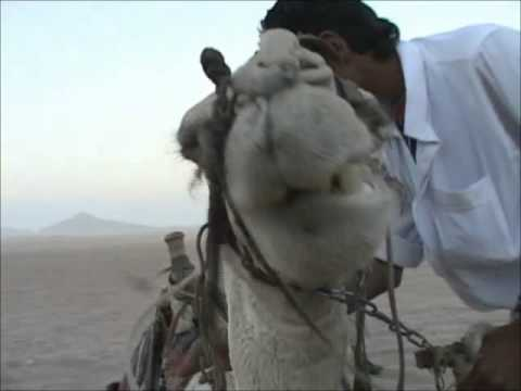 7 Dan D Noy   Live at Pacha Club Egypt Sharm el Sheikh   Bring The Noise Remix   Public Enemy Vs Benny Benassi