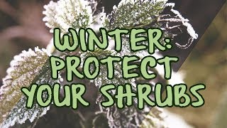 Winter: Protect Your Shrubs
