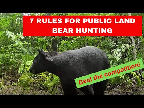 7-rules-for-successful-public-land-bear-baiting