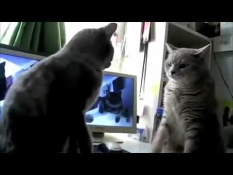 Talking Kittes Playing Patty Cake ^.^
