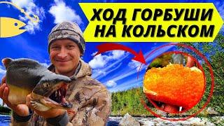 Рыбалка на Кольском полуострове Лето 2019 Как добывалась икра Нахлыст fly fishing