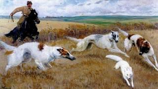 Русская борзая, порода охотничьих собак (рассказывает Ирина Коршунова)