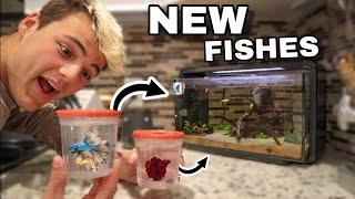 My 2 *NEW* BETTA FISH!! (rip luna)