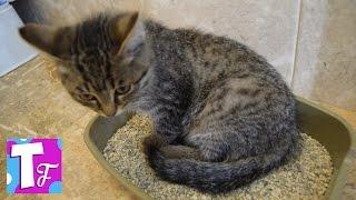 Влог КОТ Самсон питомец Димы Покупаем всё для котенка VLOG Cat Samson pet Dima #Животные