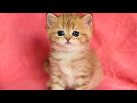 This kitten gives you love vibes