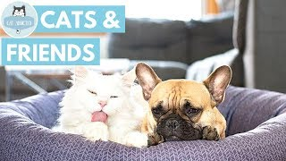 Cute Cats With Their Best Friends thumbnail