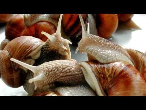 French Food Snails